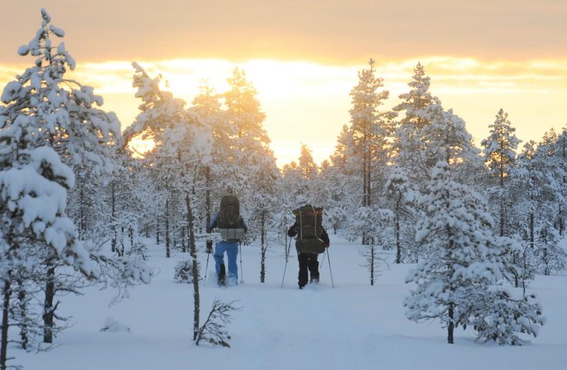 Härlig vinter i Gästrikeskogennu